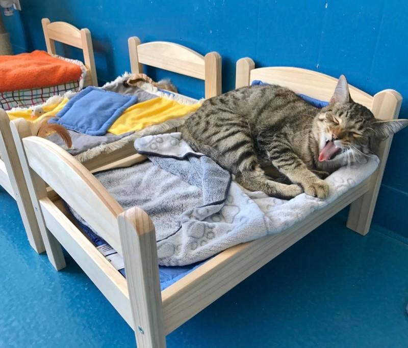 Днем, картинки кошки спят в кроватках