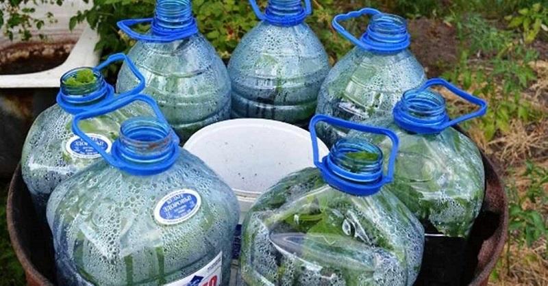 Овощи можно выращивать не на грядке, а в… бутылке!