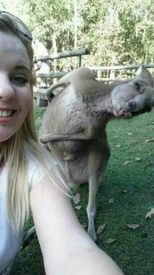 Фотографии со смешными животными, попавшими в кадр случайно