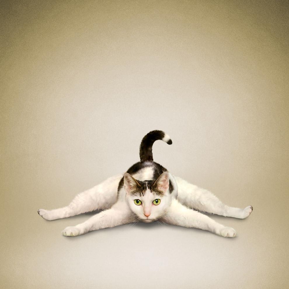 позы йоги картинки прикольные стонут громко